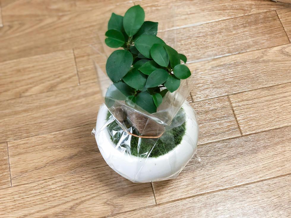 無印良品の観葉植物