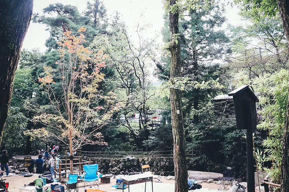 新緑が眩しい大自然がいっぱいのキャンプ場